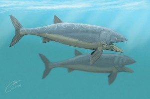 Leedsichthys, the largest spcies of fossil fish