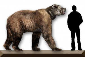 Recreation of the Giant Short-faced bear showing its size next to a human