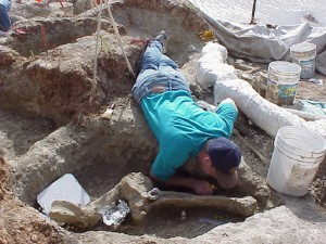 A volunteer excavates around a mammoth vertebra at the Pratt Mammoth site.
