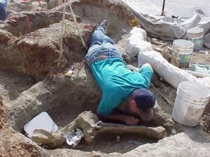 A volunteer excavates around a mammoth vertebra at the Pratt Mammoth site.