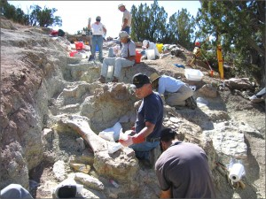 Volunteers excavate dinosaur bones from the Morrison Formation at the LC site