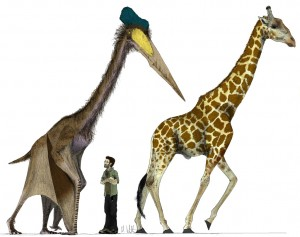 The giant pterosaur Quetzalcoatlus northropi compared to a modern giraffe. Illustration by Mark Witton.