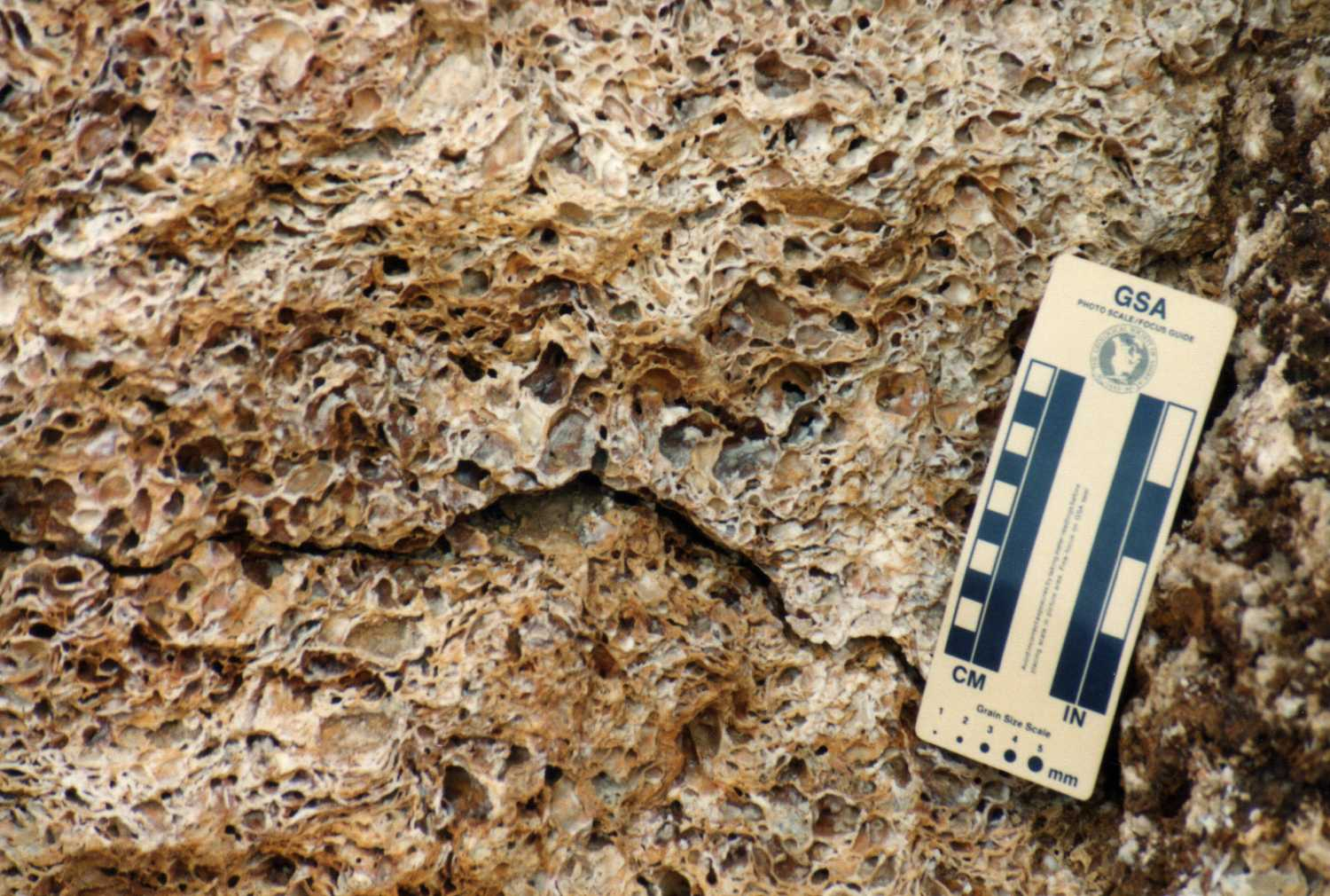 Unusual Fossil Occurrence in Travertine | Boneblogger ...