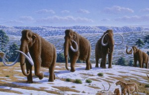 Woolly mammoths from Alan Turner (2004), National Geographic Prehistoric Mammals.