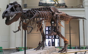 """Sues skeleton"" by Connie Ma from Chicago, United States of America - Sue, the world's largest and most complete dinosaur skeleton.Uploaded by FunkMonk. Licensed under CC BY-SA 2.0 via Wikimedia Commons - http://commons.wikimedia.org/wiki/File:Sues_skeleton.jpg#mediaviewer/File:Sues_skeleton.jpg"